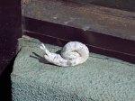 131004_snails_13